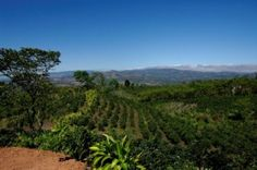 San Ramon Costa Rica Famous for Agricultural