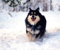 Koiria ja ihmisiä