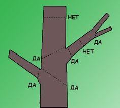 Схема обрезки древесных растений
