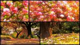 Příroda na jaře ze všech stran — Stock záběr Cherry Blossom Tree, Blossom Trees, Live Action, Stock Video, Japanese, Video Footage, Outdoor Decor, Plants, Japanese Language