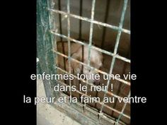 Petition: Prohibition of hunting in Spain with the galgos greyhounds! stop the slaughter!.