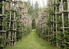 Catedral Vegetal en Italia  Artista italiano Giuliano Mauri es un apasionado por la naturaleza y la madera. Esta pasión le llevó a construir este increíble catedral vegetal. Con la ayuda de los árboles plantados y cultivados, elementos como el tronco y las ramas, el artista construyó una estructura compuesta por 42 columnas, dando forma de una catedral.