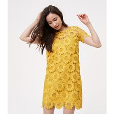LOFT Tall Sunflower Lace Dress ($98) ❤ liked on Polyvore featuring dresses, lemon curry, lace shift dresses, lace slip dress, lace dress, shift dress and lace slip