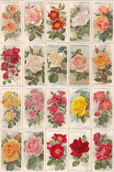 『ROSES 』W.D. & H.O.WILLS ( ENGLAND )  1912full sets (a series of 50)size : 36mm×67mm(…