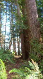1000 Images About Chuckanut Drive On Pinterest Oysters
