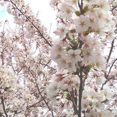 Smells like spring