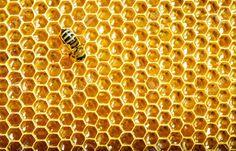 APE NERA SICULA: Il terribile anno del miele italiano: prodotte 470...