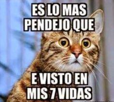 No Pinche MeMes!