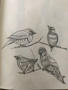 Birds Pencil