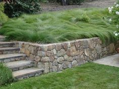 Carex praegracilis shown both mowed and non-mowed. Takes minimal maintenance and less water than a traditional lawn.