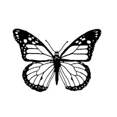 Super monarch butterfly tattoo black and white ideas Monarch Butterfly Costume, Monarch Butterfly Tattoo, Butterfly Sketch, Butterfly Outline, Butterfly Stencil, Butterfly Tattoo Designs, Butterfly Painting, Butterfly Wallpaper, Butterfly Makeup