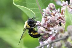 Be good to all the bees-Chicago Tribune