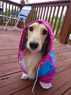 Would you judge this dog because he's wearing a hoodie??  (Not that I support either side of the Trayvon/Zimmerman case but sorry, I couldn't help myself when I see a cute dog...)