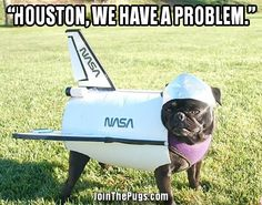 Sneak Attack In - Page 4 of 18 - Pug Meme, funny cute pugs Nasa, Amor Pug, Pugs In Costume, Costumes, Funny Animals, Cute Animals, Sneak Attack, Pugs And Kisses, Cute Dog Pictures