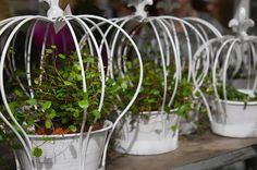 Ruukkuja ruukku Nordiska Trädgårdar messuilta Tukholmassa parasta puutarhasta blogi puutarhablogi puutarha