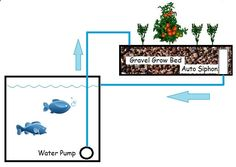An aquaponic system can provide produce and fish, for protein, over the long haul IF you know what youre doing. Take a look at this system and learn from a pro.