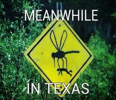 Meanwhile in Texas Mosquitos