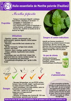 Huile essential menthe poivrée: Propriétés and recovery without danger Oregano Essential Oil, Are Essential Oils Safe, Young Living Essential Oils, Oil Safe, Homemade Cosmetics, Medicinal Herbs, Health And Wellbeing, Alternative Medicine, Tea Tree