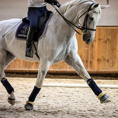 Horses ♥ Dressage is such a beautiful discipline!