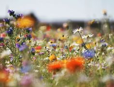 How to create a wildflower meadow in the garden