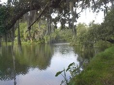 New Orleans, USA. Went on a swamp tour in the bayou and fed the alligators marshmellows...