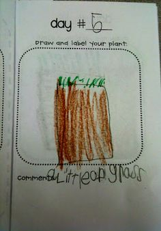 Kindergarten students record their observations about grass plant growth!