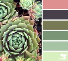 Succulent Hues - http://design-seeds.com/index.php/home/entry/succulent-hues10