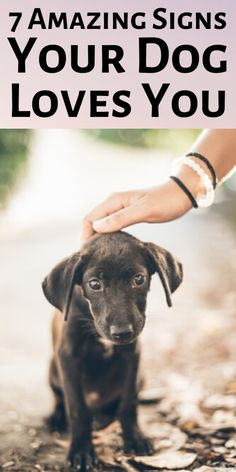 Do you sometimes find yourself looking for signs your dog loves you too? Here are the top 7 amazing signs your dog loves you! Big Dog Little Dog, Wild Animals Pictures, Dog Mom Gifts, Pet Fox, Dog Rules, Dog Hacks, Family Dogs, Dog Behavior, Dogs And Puppies