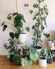 plants - Home sweet home and all freshly watered. Cool Plants, Air Plants, Interior Inspiration, Room Inspiration, Interior Design Plants, Sweet Home, Plants Are Friends, Outdoor Plants, Houseplants