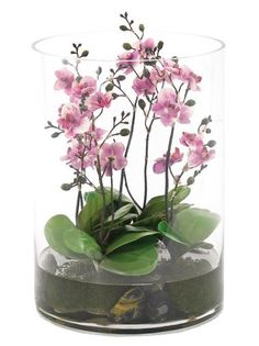 Natural Decorations, Inc. - Orchid Phalaenopsis Terrarium | Glass Cylinder | Lavender
