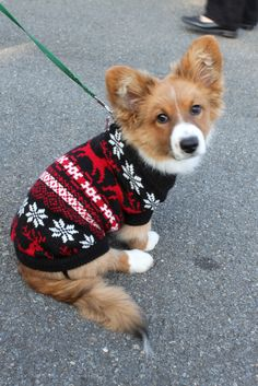 The Daily Corgi: I Love A Parade: Middleburg Christmas Corgi Corps!
