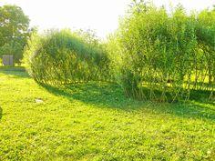Živé stavby z vrby - vrbové stavby - Proutěné ploty a rohože na plot   Vrbové stavby - Naše realizace Living Willow, Vineyard, Country Roads, Garden, Outdoor, Outdoors, Garten, Vine Yard, Lawn And Garden