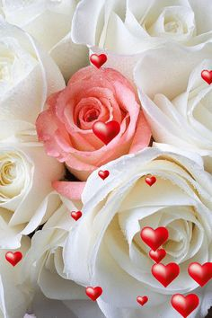 Animation rosas bellas