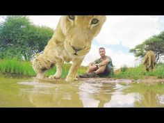What Do Lions Drink?? | The Lion Whisperer - YouTube