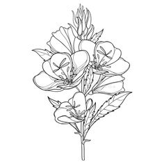 Art Inspiration Drawing, Tattoo Inspiration, Evening Primrose Flower, Flower Template, Black And White Drawing, Colour Pallete, Bunch Of Flowers, Free Illustrations, Flower Tattoos