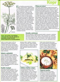 kopr Dieta Detox, Edible Flowers, Herb Garden, Spices, Herbs, Gardening, Vegetables, Health, Spice