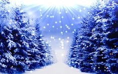 Śnieg, Zima, Choinki