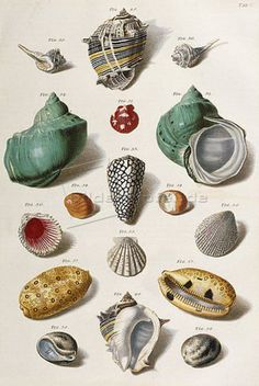 Botanical Illustration, Illustration Art, Vintage Illustrations, Art For Art Sake, Beach Art, Textile Prints, Map Art, Hand Coloring, A4 Poster