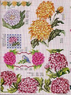 Gallery.ru / Фото #9 - Ботаника-цветы - irislena CRISANTEMO 2
