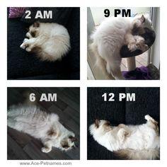 Our cat mavi