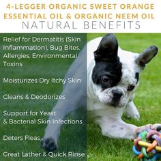 Our moisturizer works quickly and naturally to soothe dry and cracked nose and paw skin with our unscented organic hemp, shea butter, calendula and beeswax. Scar Reduction, Natural Vitamin E, Dog Nose, Natural Sunscreen, Natural Preservatives, Orange Essential Oil, Best Moisturizer, Healing Herbs, Organic Oil
