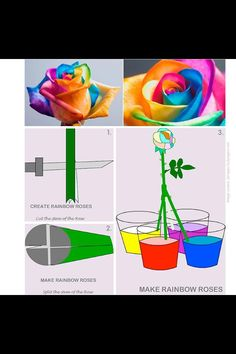 Science and DIY bunte Rosen … Mehr.