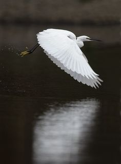 Little Egret... The LORD GOD made them all