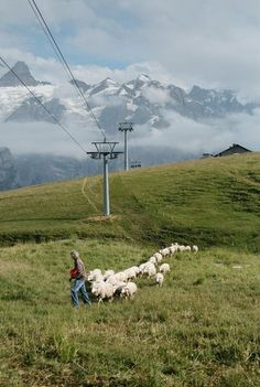 The Outsider Of Dairy Farmers - Bruno Appert and his sheeps. Dairy Farmers, The North Face, The Outsiders, Mountains, Landscape, Travel, Scenery, Viajes, Destinations