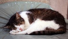 The Most Relaxed Cat in the World in Piran Slovenia | by Lawrence Chard