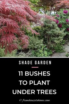 Find out which bushes to plant under trees in the shade garden in your backyard or front yard. These shrubs will help to brighten up your yard. #fromhousetohome #bushes #shade #gardeningtips #gardening #gardenideas Shade Loving Shrubs, Shade Shrubs, Shade Garden Plants, Shade Perennials, Garden Trees, Garden Bed, Potager Garden, Summer Plants, Side Garden