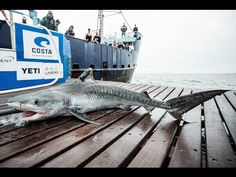 Expedition Jacksonville: Tagging Tiger Shark Viper