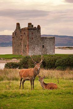 Castle & Red Deer In Scotland
