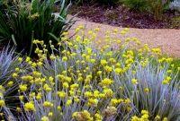 Conostylis candicans mass planted Hillside Garden, Native Australians, Australian Garden, Home Garden Design, Water Wise, Drought Tolerant Plants, Annual Plants, Ornamental Grasses, Native Plants
