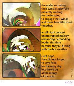 philharmonic cicadas